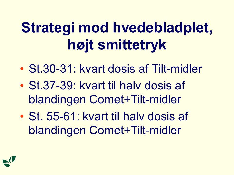 Strategi mod hvedebladplet, højt smittetryk St.30-31: kvart dosis af Tilt-midler St.37-39: kvart til halv dosis af blandingen Comet+Tilt-midler St.