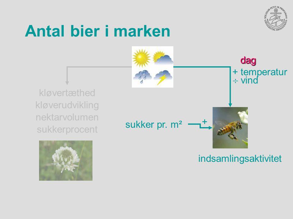 Antal bier i marken nektarvolumen sukkerprocent kløvertæthed kløverudviklingdag + temperatur  vind + sukker pr.