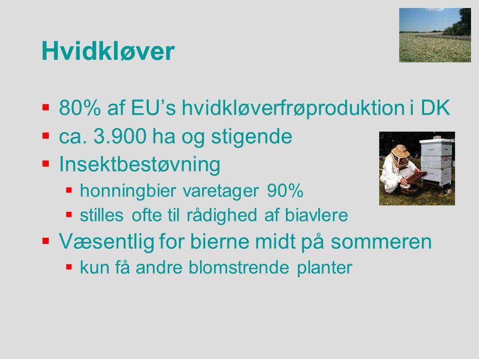  80% af EU's hvidkløverfrøproduktion i DK  ca.