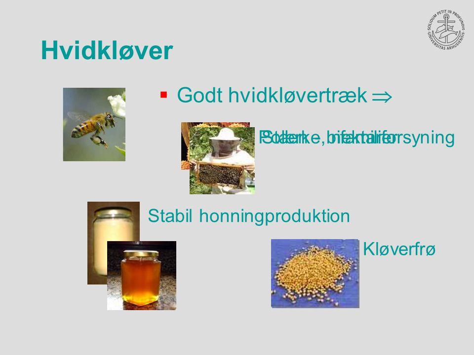  Godt hvidkløvertræk  Kløverfrø Stabil honningproduktion Pollen -, nektarforsyning Stærke bifamilier
