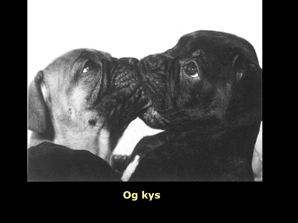 Og kys