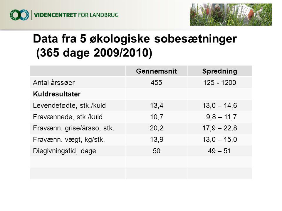 Data fra 5 økologiske sobesætninger (365 dage 2009/2010) GennemsnitSpredning Antal årssøer455125 - 1200 Kuldresultater Levendefødte, stk./kuld13,413,0 – 14,6 Fravænnede, stk./kuld10,7 9,8 – 11,7 Fravænn.