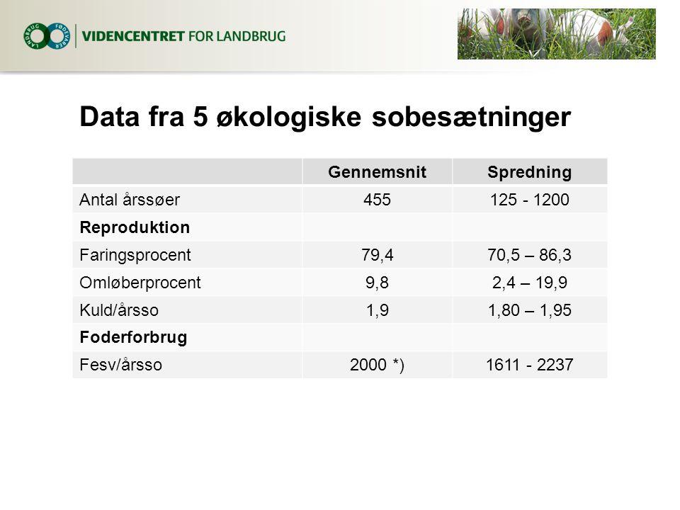 Data fra 5 økologiske sobesætninger GennemsnitSpredning Antal årssøer455125 - 1200 Reproduktion Faringsprocent79,470,5 – 86,3 Omløberprocent9,82,4 – 19,9 Kuld/årsso1,91,80 – 1,95 Foderforbrug Fesv/årsso2000 *)1611 - 2237