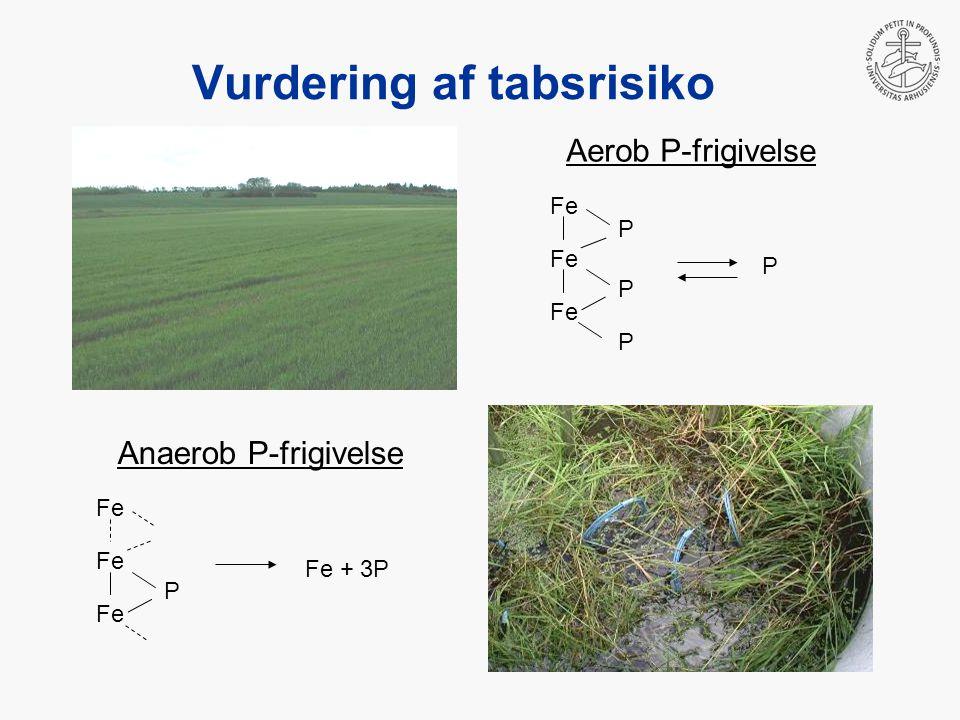 Vurdering af tabsrisiko Aerob P-frigivelse Anaerob P-frigivelse P Fe P P P P Fe + 3P