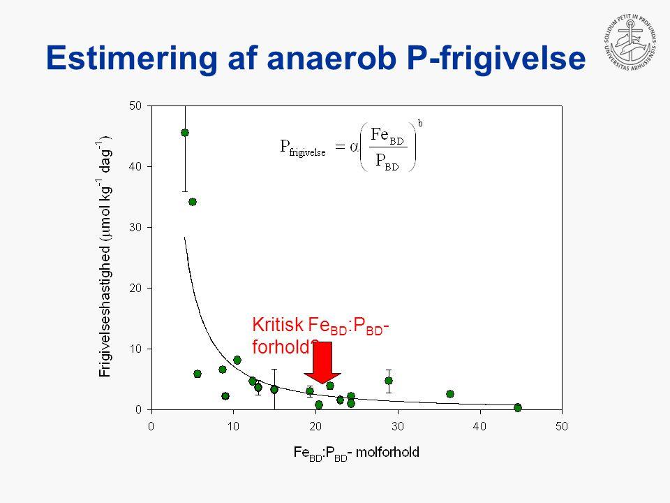 Estimering af anaerob P-frigivelse Kritisk Fe BD :P BD - forhold
