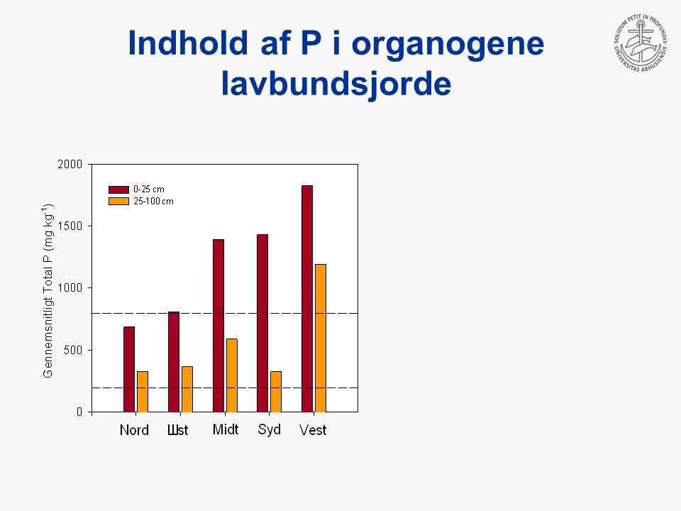 Indhold af P i organogene lavbundsjorde