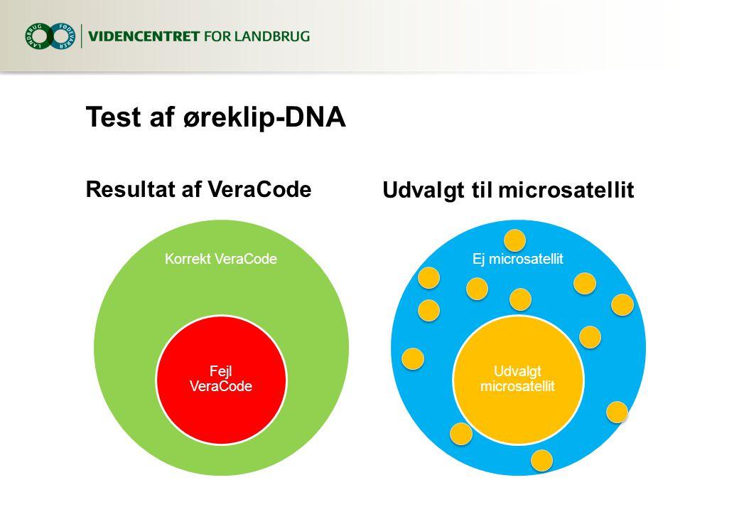Test af øreklip-DNA Resultat af VeraCode Korrekt VeraCode Fejl VeraCode Udvalgt til microsatellit Ej microsatellit Udvalgt microsatellit