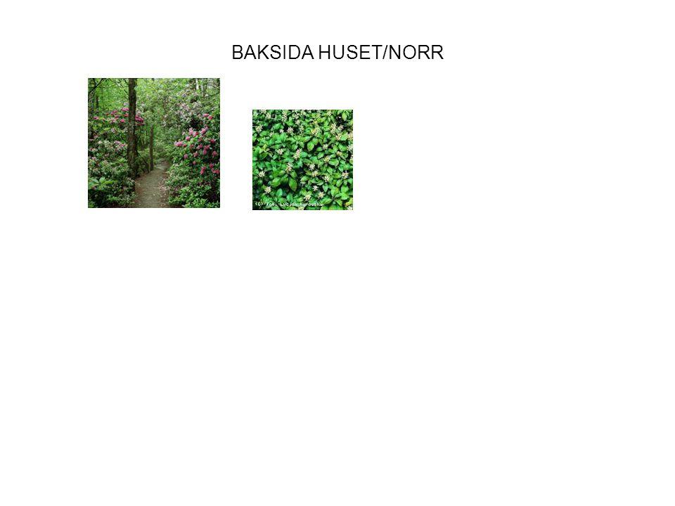 BAKSIDA HUSET/NORR
