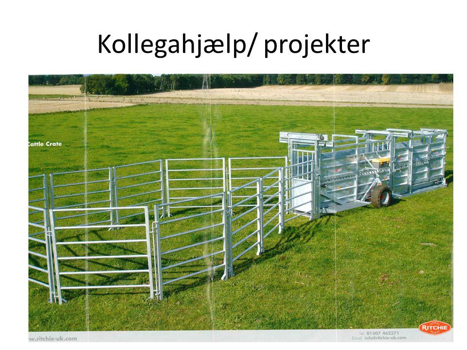 Kollegahjælp/ projekter