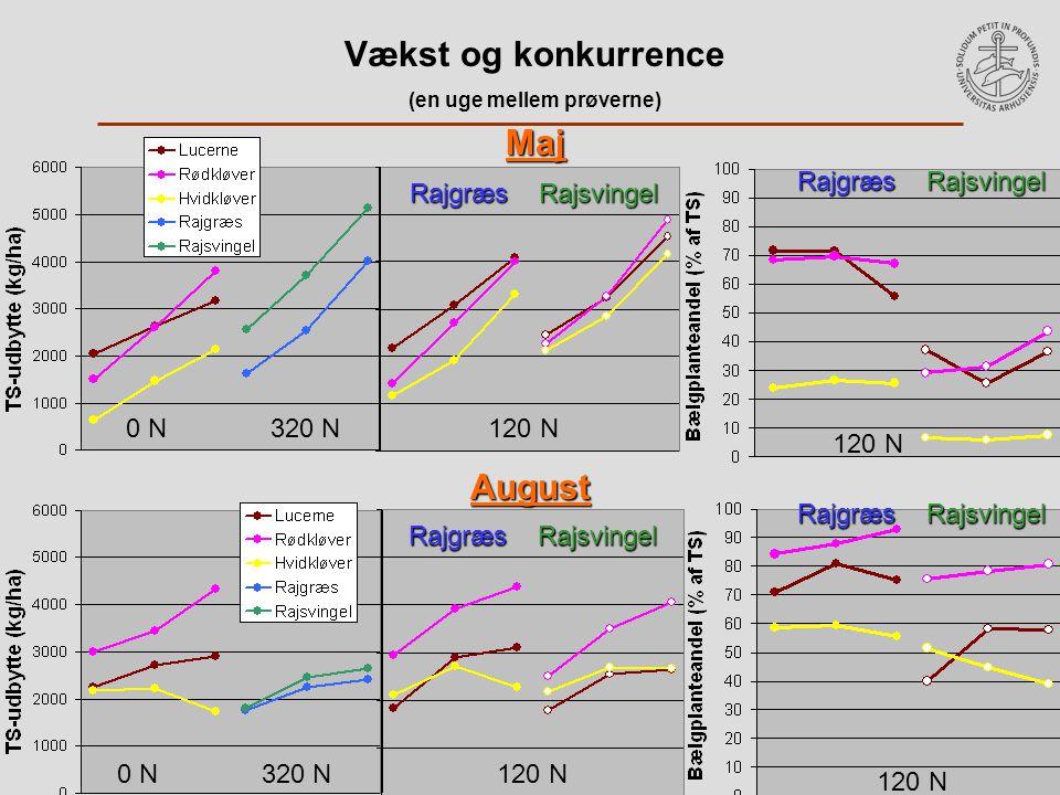 Vækst og konkurrence (en uge mellem prøverne) Maj August Rajgræs Rajsvingel 0 N 320 N 120 N