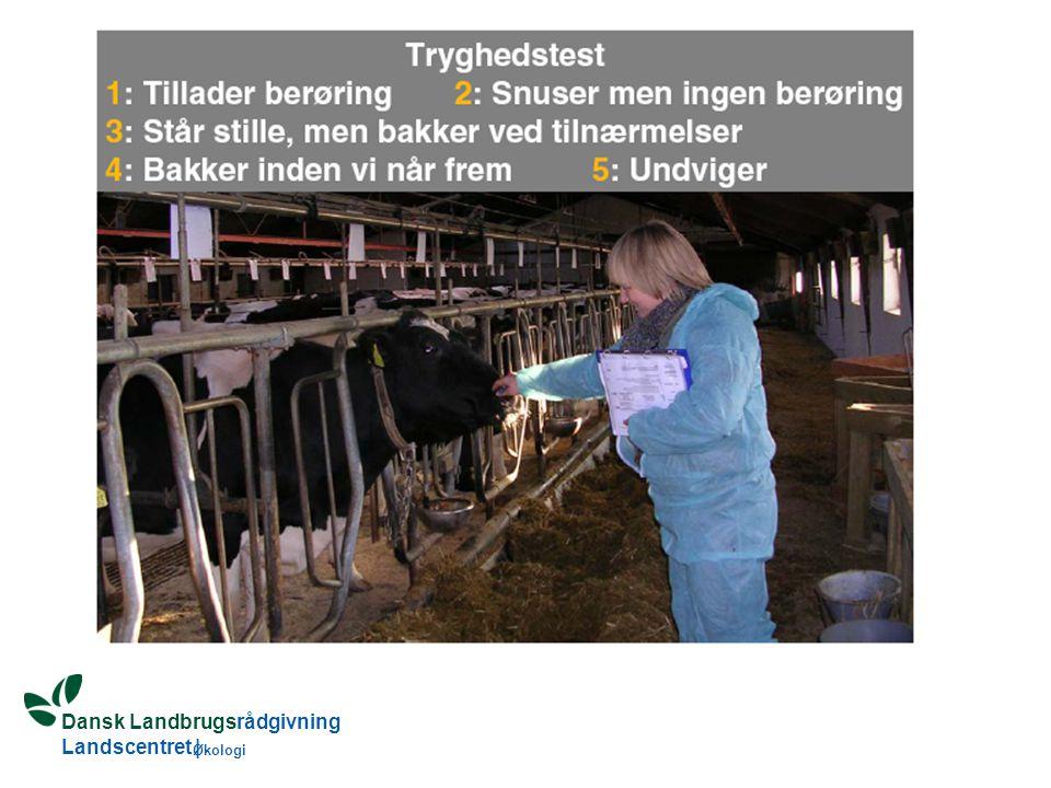 Dansk Landbrugsrådgivning Landscentret | Økologi