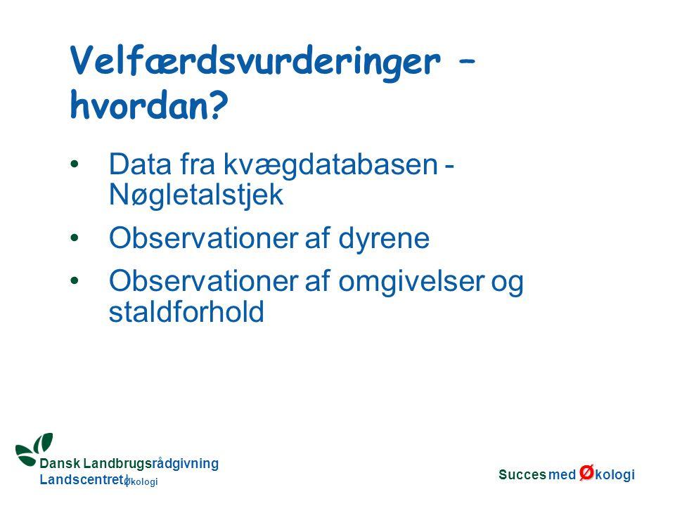 Dansk Landbrugsrådgivning Landscentret | Økologi Data fra kvægdatabasen - Nøgletalstjek Observationer af dyrene Observationer af omgivelser og staldforhold Velfærdsvurderinger – hvordan.