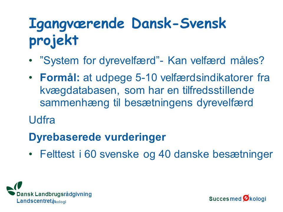 Dansk Landbrugsrådgivning Landscentret | Økologi System for dyrevelfærd - Kan velfærd måles.