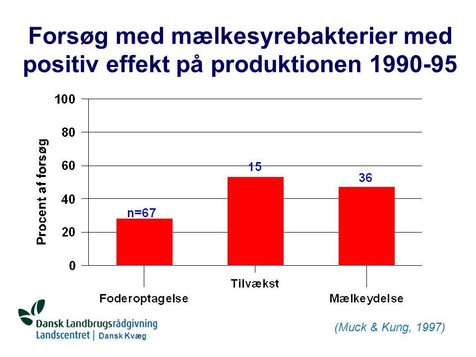Dansk Kvæg S:\SUNDFODE\RUT\PowerPoint\Grovfoderseminar 2004 - Ensileringsmidler.ppt Forsøg med mælkesyrebakterier med positiv effekt på produktionen 1990-95 (Muck & Kung, 1997)