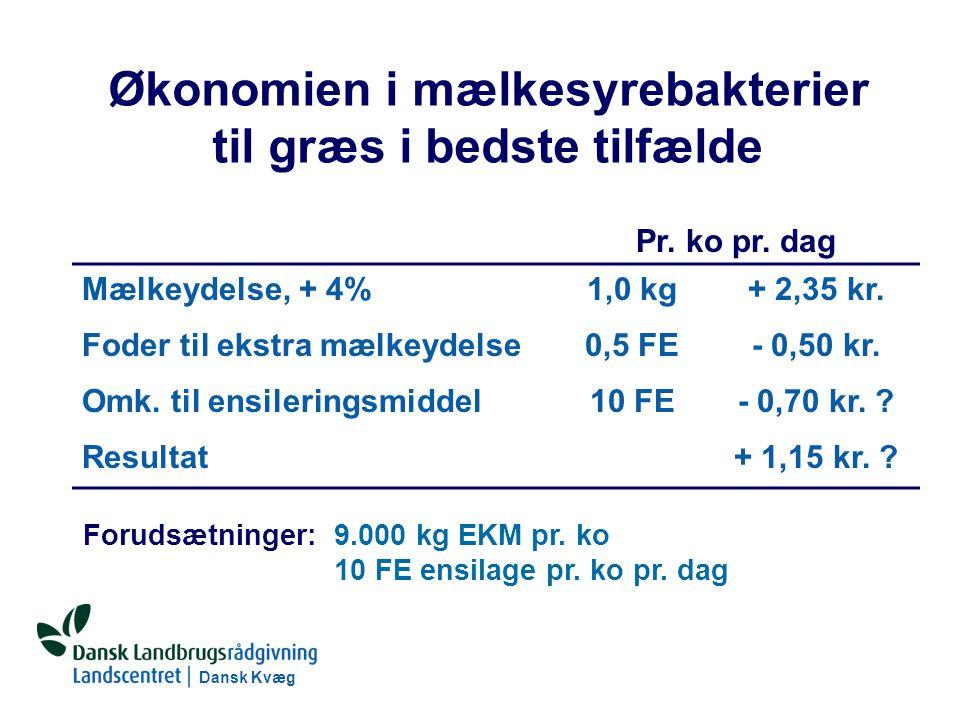 Dansk Kvæg S:\SUNDFODE\RUT\PowerPoint\Grovfoderseminar 2004 - Ensileringsmidler.ppt Økonomien i mælkesyrebakterier til græs i bedste tilfælde Pr.