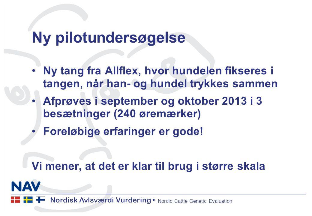 Nordisk Avlsværdi Vurdering Nordic Cattle Genetic Evaluation Ny pilotundersøgelse Ny tang fra Allflex, hvor hundelen fikseres i tangen, når han- og hundel trykkes sammen Afprøves i september og oktober 2013 i 3 besætninger (240 øremærker) Foreløbige erfaringer er gode.