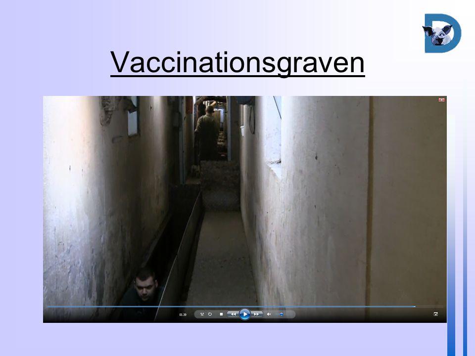 Vaccinationsgraven