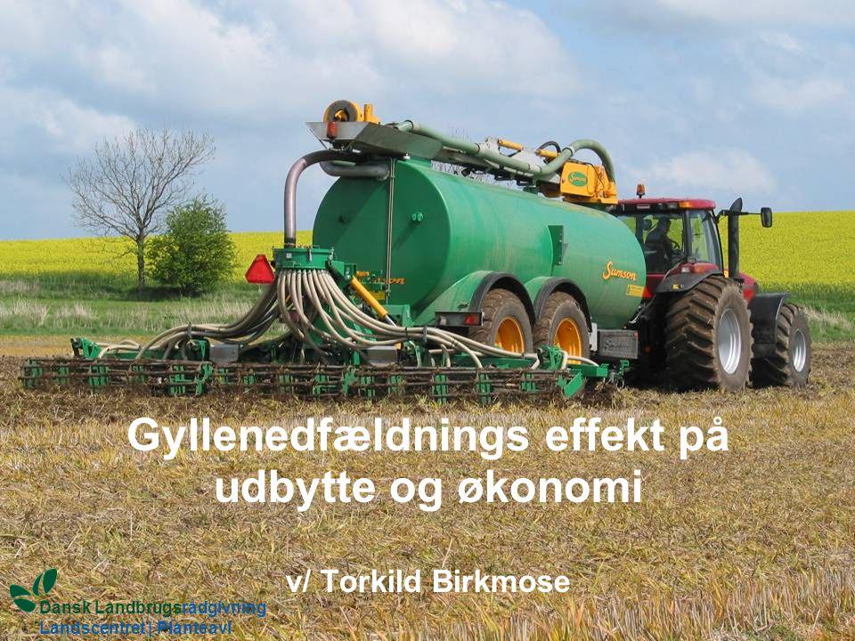 Gyllenedfældnings effekt på udbytte og økonomi v/ Torkild Birkmose Dansk Landbrugsrådgivning Landscentret | Planteavl