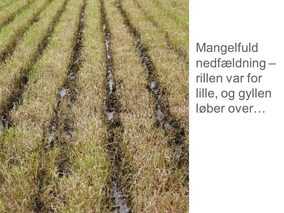 Dansk Landbrugsrådgivning Landscentret Mangelfuld nedfældning – rillen var for lille, og gyllen løber over…