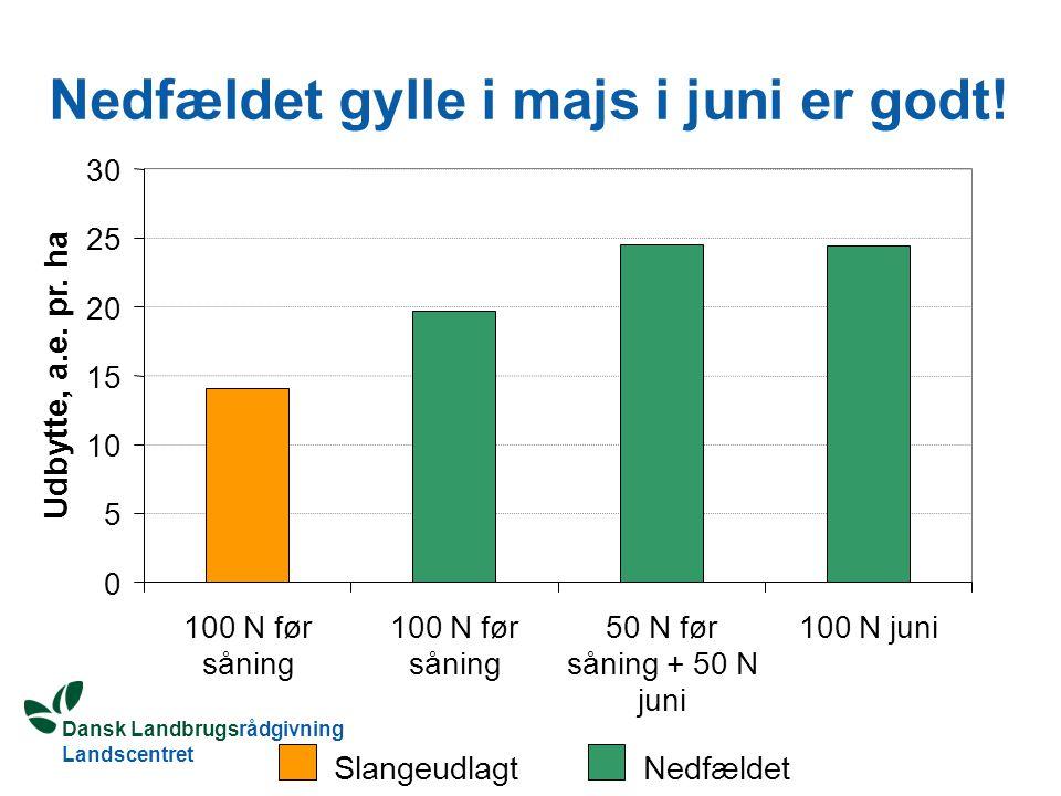 Dansk Landbrugsrådgivning Landscentret Nedfældet gylle i majs i juni er godt.