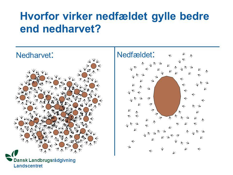 Dansk Landbrugsrådgivning Landscentret Hvorfor virker nedfældet gylle bedre end nedharvet.