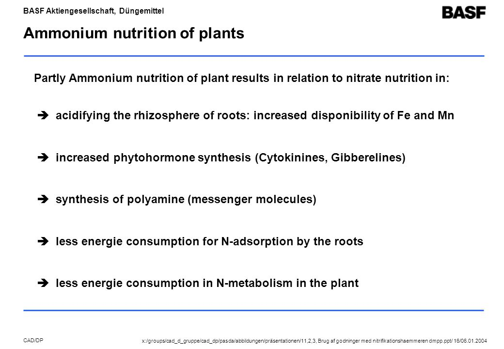 BASF Aktiengesellschaft, Düngemittel CAD/DP Ammonium nutrition of plants  acidifying the rhizosphere of roots: increased disponibility of Fe and Mn  increased phytohormone synthesis (Cytokinines, Gibberelines)  synthesis of polyamine (messenger molecules)  less energie consumption for N-adsorption by the roots  less energie consumption in N-metabolism in the plant Partly Ammonium nutrition of plant results in relation to nitrate nutrition in: x:/groups/cad_d_gruppe/cad_dp/pasda/abbildungen/präsentationen/11,2,3, Brug af godninger med nitrifikationshaemmeren dmpp.ppt/ 16/06.01.2004