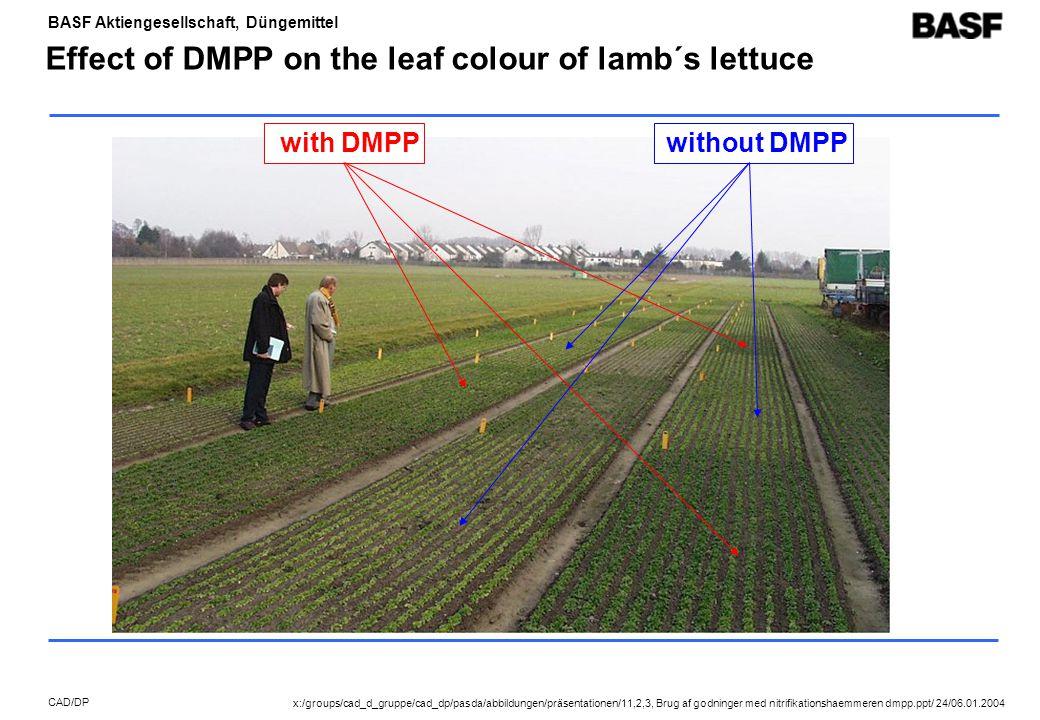 BASF Aktiengesellschaft, Düngemittel CAD/DP Effect of DMPP on the leaf colour of lamb´s lettuce with DMPPwithout DMPP x:/groups/cad_d_gruppe/cad_dp/pasda/abbildungen/präsentationen/11,2,3, Brug af godninger med nitrifikationshaemmeren dmpp.ppt/ 24/06.01.2004