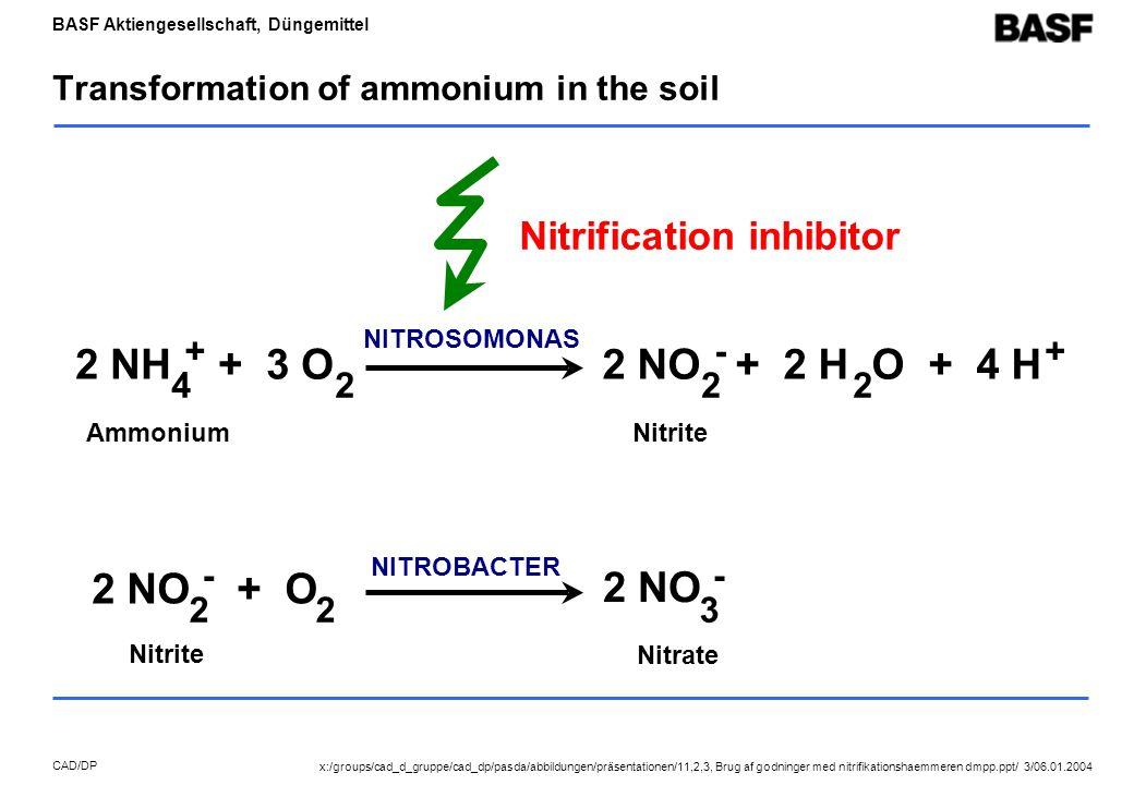 BASF Aktiengesellschaft, Düngemittel CAD/DP Transformation of ammonium in the soil NITROBACTER 2 NO + O 2 - 2 2 NO 3 - Nitrite Nitrate AmmoniumNitrite NITROSOMONAS 2 NO + 2 H O + 4 H 2 - 2 + 2 NH + 3 O 4 + 2 Nitrification inhibitor x:/groups/cad_d_gruppe/cad_dp/pasda/abbildungen/präsentationen/11,2,3, Brug af godninger med nitrifikationshaemmeren dmpp.ppt/ 3/06.01.2004