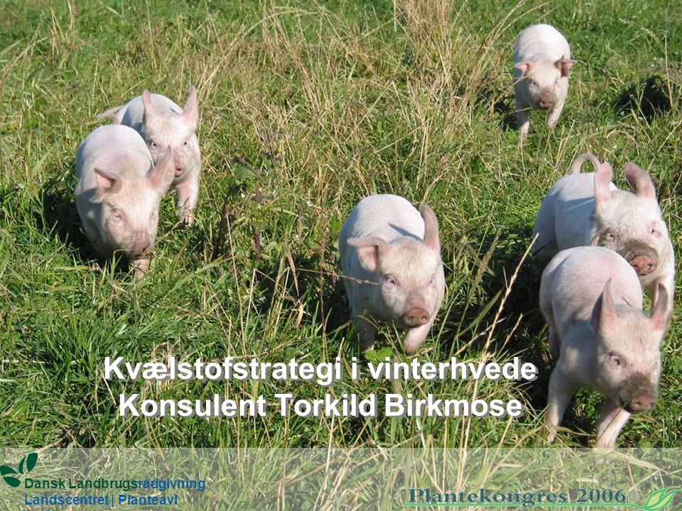 Kvælstofstrategi i vinterhvede Konsulent Torkild Birkmose Dansk Landbrugsrådgivning Landscentret | Planteavl