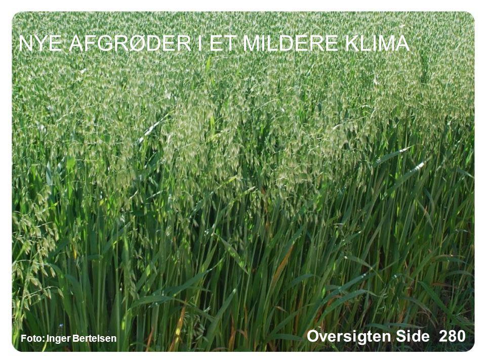 NYE AFGRØDER I ET MILDERE KLIMA Foto: Inger Bertelsen Oversigten Side 280