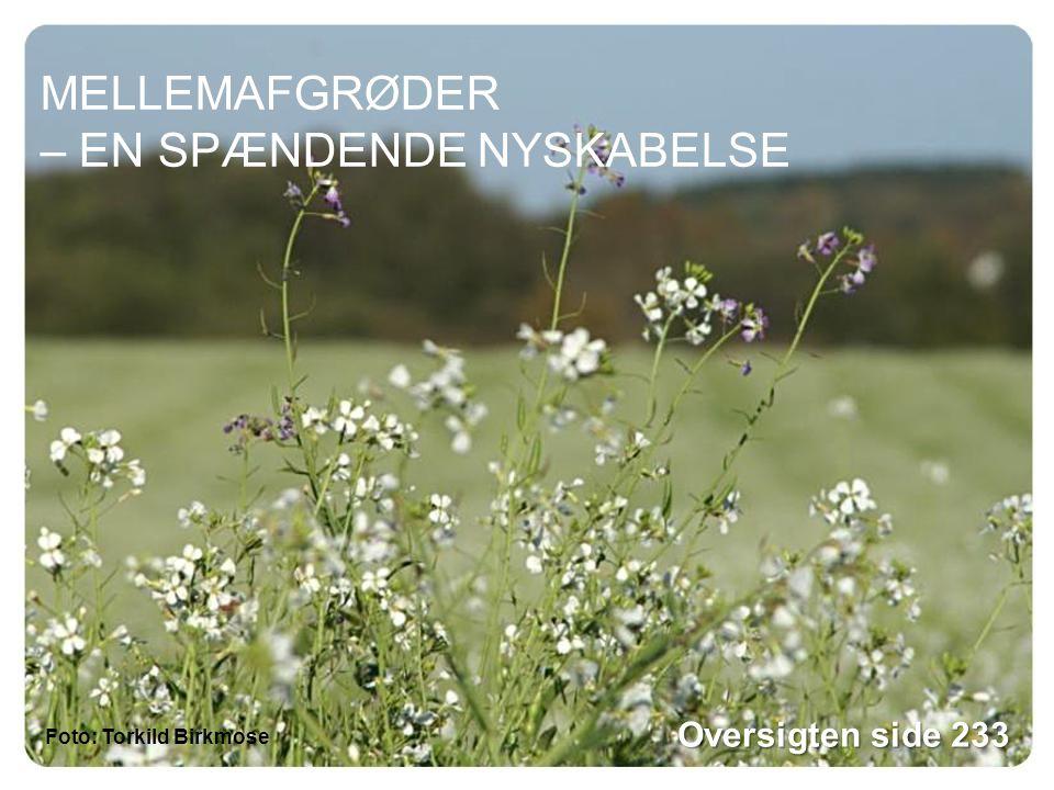 MELLEMAFGRØDER – EN SPÆNDENDE NYSKABELSE Foto: Torkild Birkmose Oversigten side 233