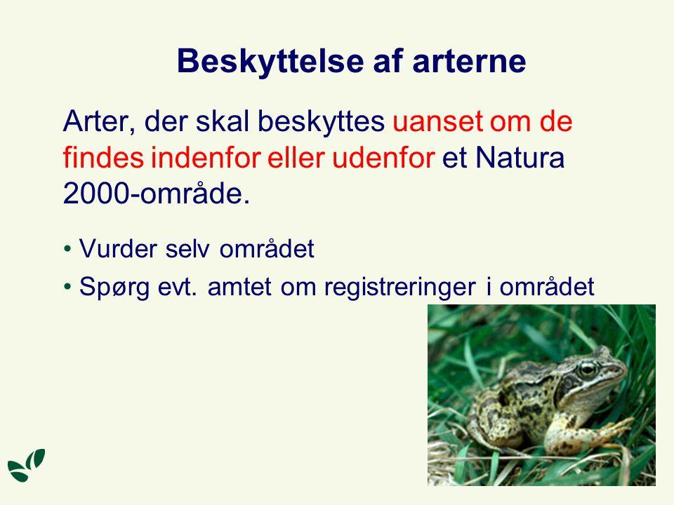 Beskyttelse af arterne Arter, der skal beskyttes uanset om de findes indenfor eller udenfor et Natura 2000-område.