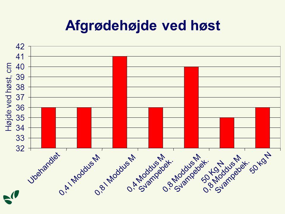 Afgrødehøjde ved høst 32 33 34 35 36 37 38 39 40 41 42 Ubehandlet 0,4 l Moddus M 0,8 l Moddus M 0,4 Moddus M Svampebek.
