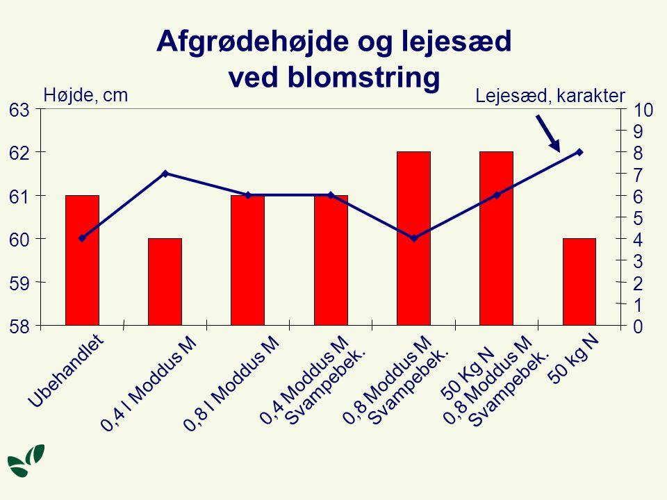 Afgrødehøjde og lejesæd ved blomstring 58 59 60 61 62 63 Ubehandlet 0,4 l Moddus M 0,8 l Moddus M 0,4 Moddus M Svampebek.