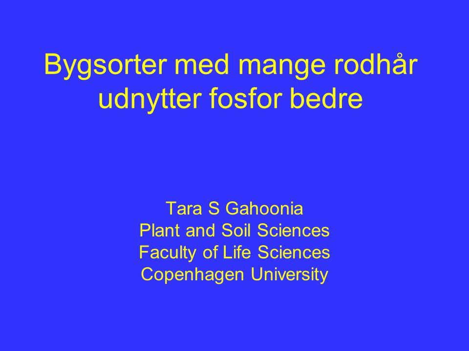 Bygsorter med mange rodhår udnytter fosfor bedre Tara S Gahoonia Plant and Soil Sciences Faculty of Life Sciences Copenhagen University