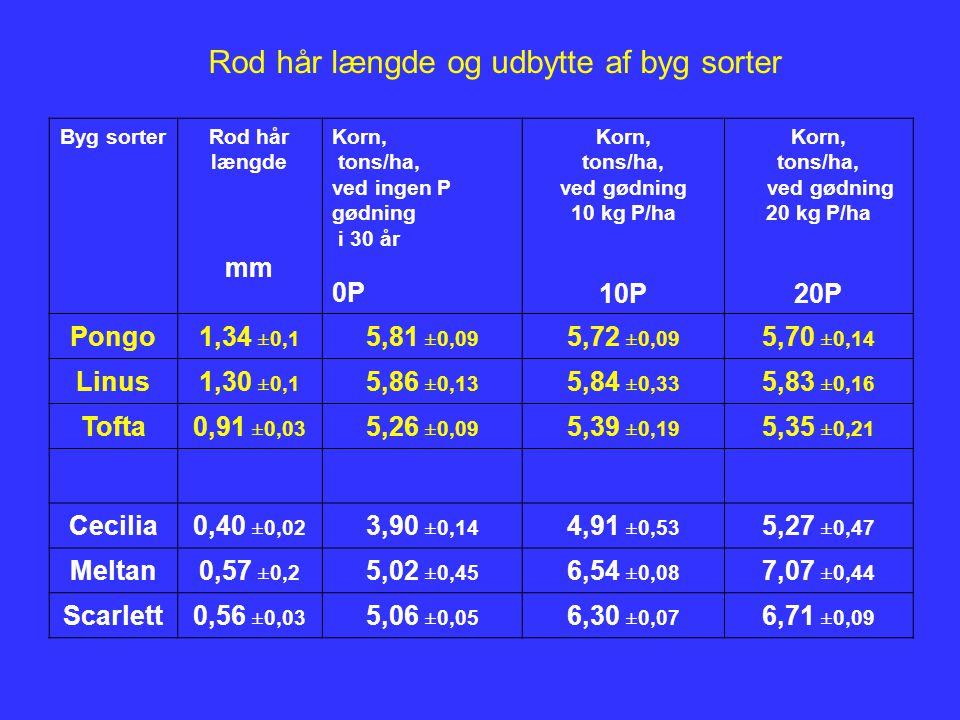 Byg sorterRod hår længde mm Korn, tons/ha, ved ingen P gødning i 30 år 0P Korn, tons/ha, ved gødning 10 kg P/ha 10P Korn, tons/ha, ved gødning 20 kg P/ha 20P Pongo1,34 ±0,1 5,81 ±0,09 5,72 ±0,09 5,70 ±0,14 Linus1,30 ±0,1 5,86 ±0,13 5,84 ±0,33 5,83 ±0,16 Tofta0,91 ±0,03 5,26 ±0,09 5,39 ±0,19 5,35 ±0,21 Cecilia0,40 ±0,02 3,90 ±0,14 4,91 ±0,53 5,27 ±0,47 Meltan0,57 ±0,2 5,02 ±0,45 6,54 ±0,08 7,07 ±0,44 Scarlett0,56 ±0,03 5,06 ±0,05 6,30 ±0,07 6,71 ±0,09 Rod hår længde og udbytte af byg sorter