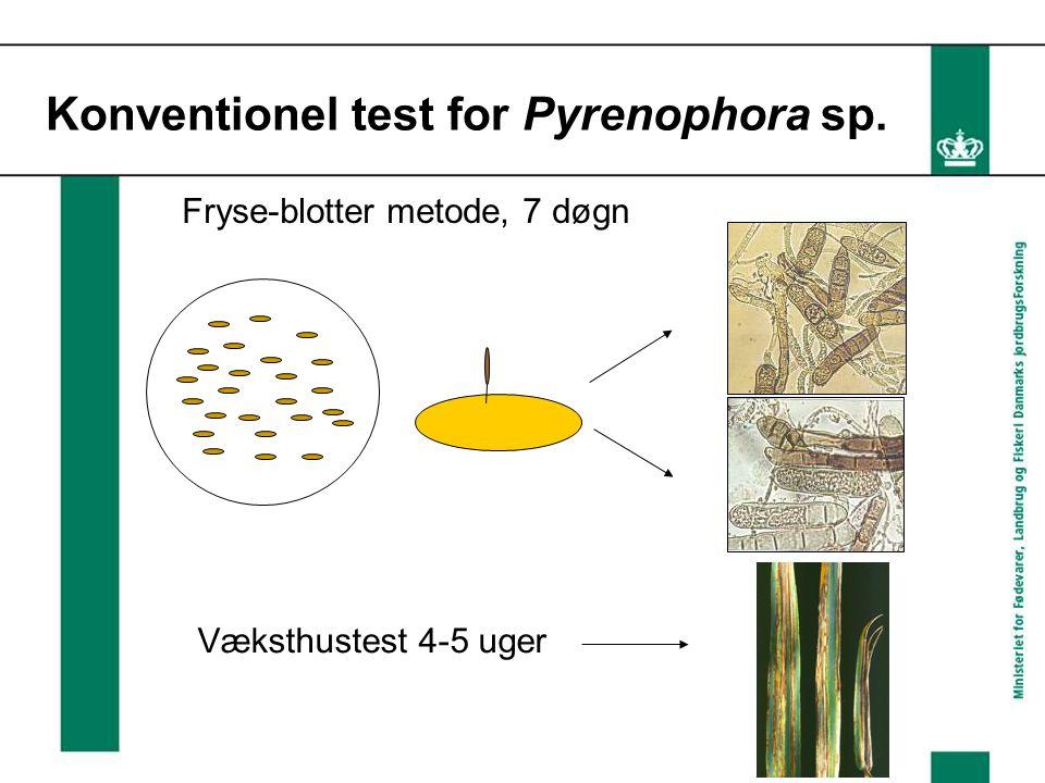 Konventionel test for Pyrenophora sp. Væksthustest 4-5 uger Fryse-blotter metode, 7 døgn