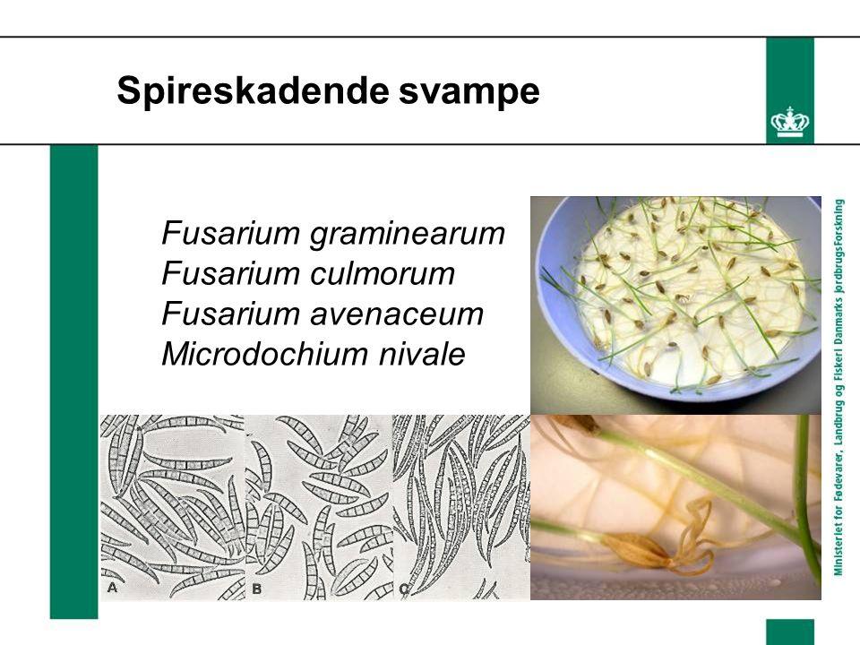 Spireskadende svampe Fusarium graminearum Fusarium culmorum Fusarium avenaceum Microdochium nivale