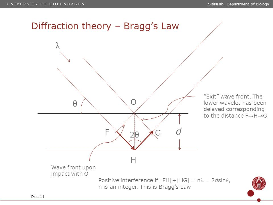 Diffraction theory – Bragg's Law SBiNLab, Department of Biology Dias 11 d O F G H  Wave front upon impact with O Exit wave front.