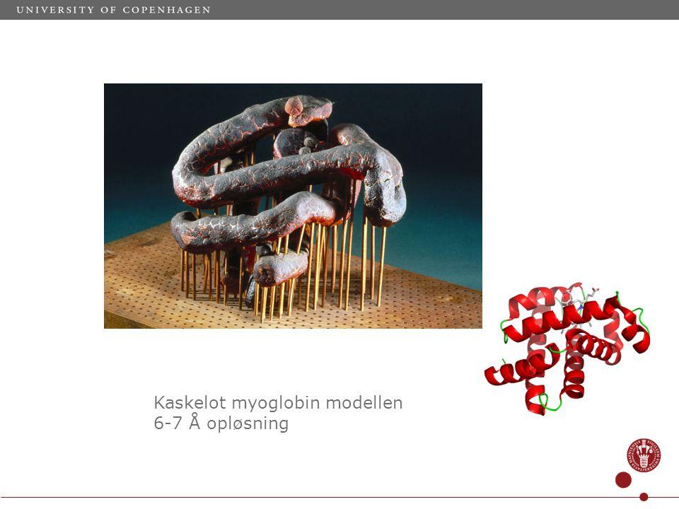 Kaskelot myoglobin modellen 6-7 Å opløsning
