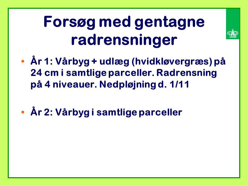Forsøg med gentagne radrensninger År 1: Vårbyg + udlæg (hvidkløvergræs) på 24 cm i samtlige parceller.
