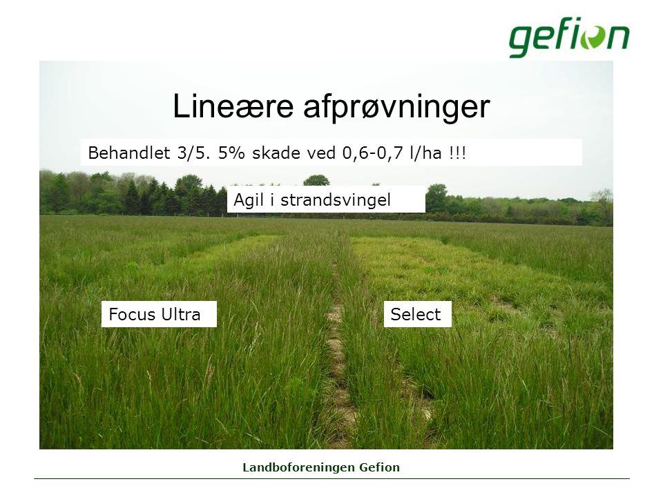 Landboforeningen Gefion Lineære afprøvninger Agil i strandsvingel Behandlet 3/5.