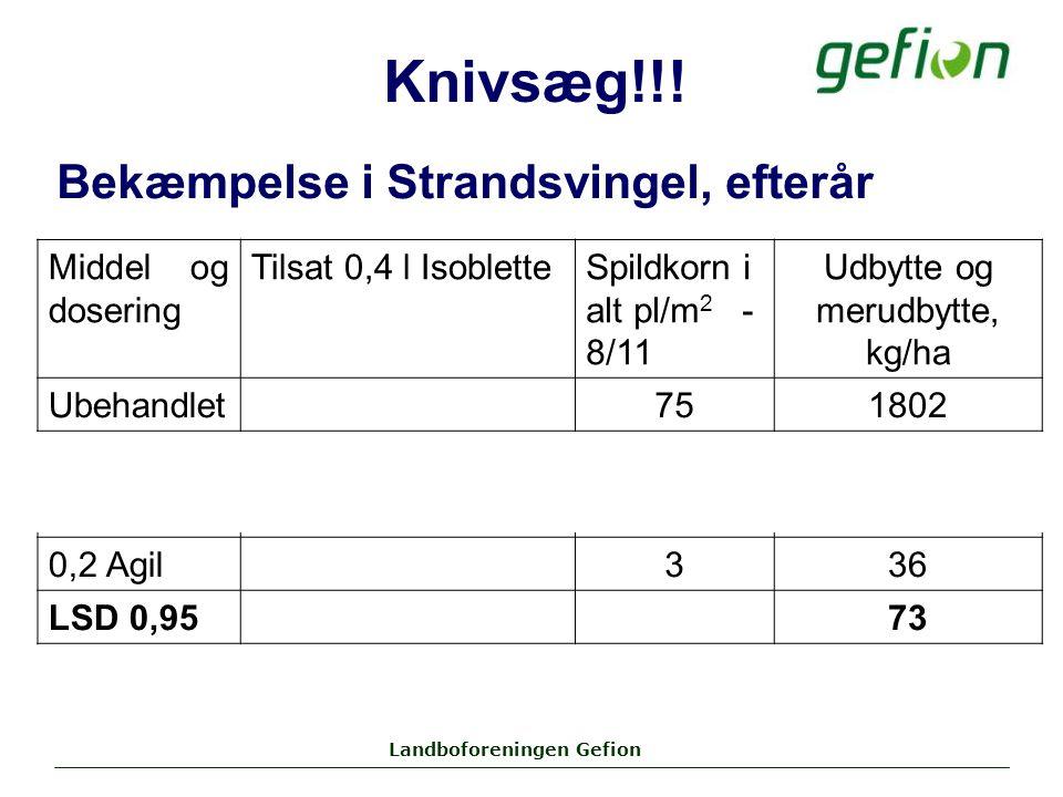 Landboforeningen Gefion Middel og dosering Tilsat 0,4 l IsobletteSpildkorn i alt pl/m 2 - 8/11 Udbytte og merudbytte, kg/ha Ubehandlet751802 0,4 Agil+0-1309 0,2 Agil+0-335 0,2 Agil336 LSD 0,9573 Bekæmpelse i Strandsvingel, efterår Knivsæg!!!