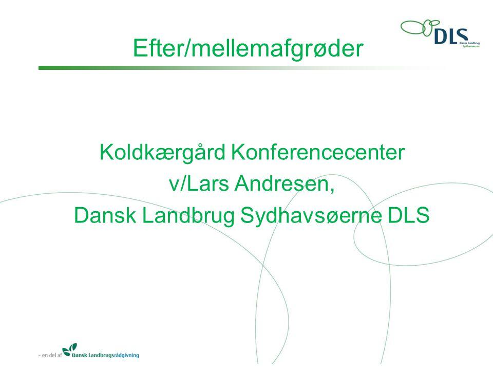Efter/mellemafgrøder Koldkærgård Konferencecenter v/Lars Andresen, Dansk Landbrug Sydhavsøerne DLS