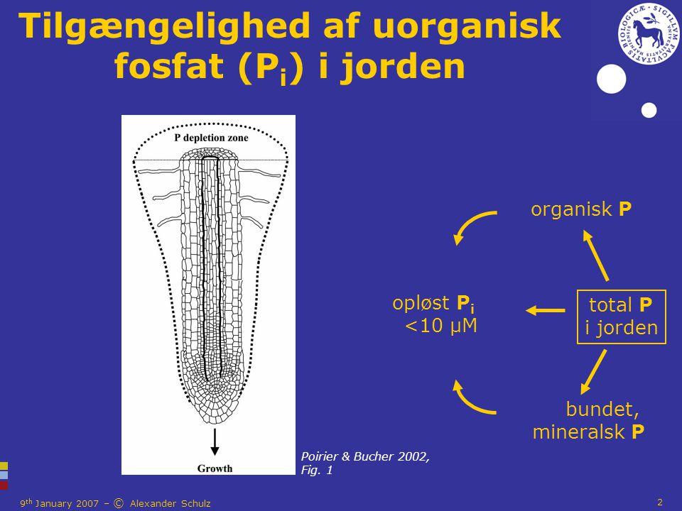 9 th January 2007 – © Alexander Schulz 2 Tilgængelighed af uorganisk fosfat (P i ) i jorden organisk P opløst P i <10 µM total P i jorden bundet, mineralsk P Poirier & Bucher 2002, Fig.