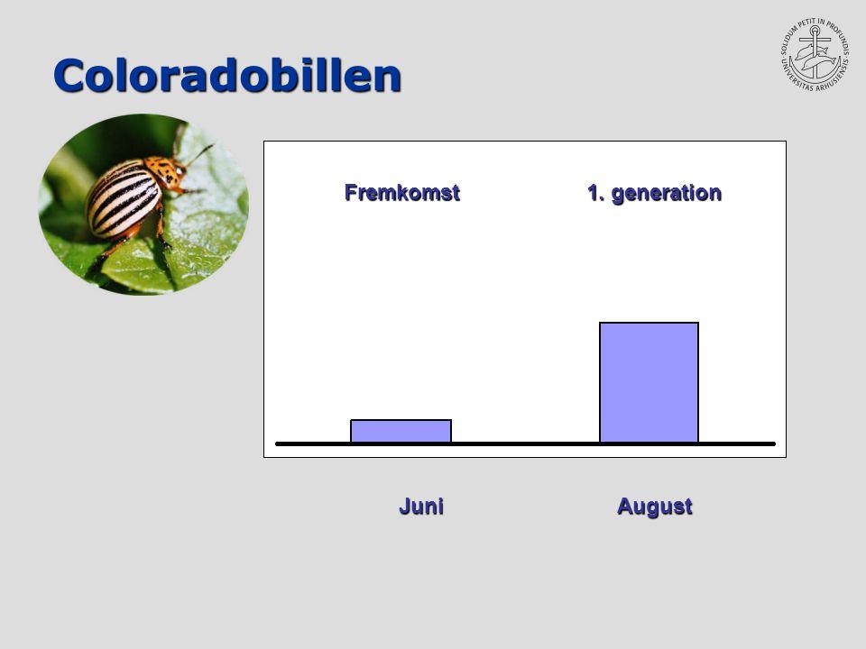 Coloradobillen Juni August Fremkomst 1. generation Fremkomst 1. generation