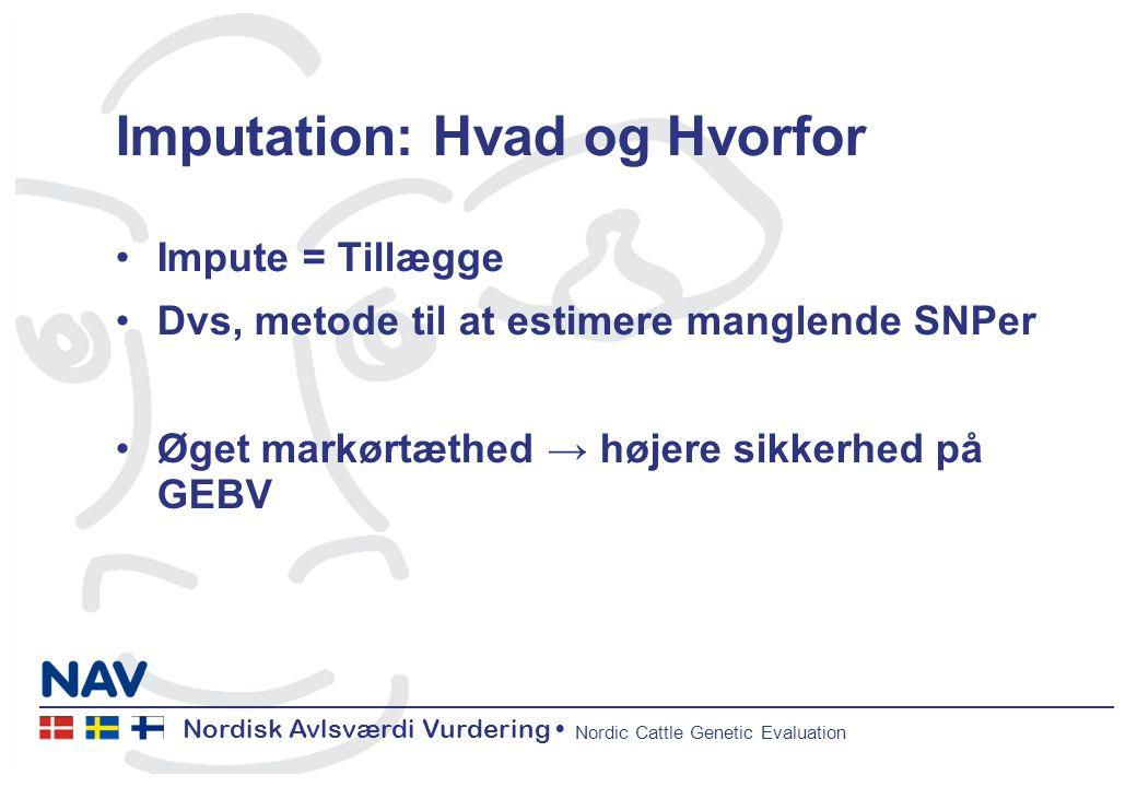 Nordisk Avlsværdi Vurdering Nordic Cattle Genetic Evaluation Imputation: Hvad og Hvorfor Impute = Tillægge Dvs, metode til at estimere manglende SNPer Øget markørtæthed → højere sikkerhed på GEBV