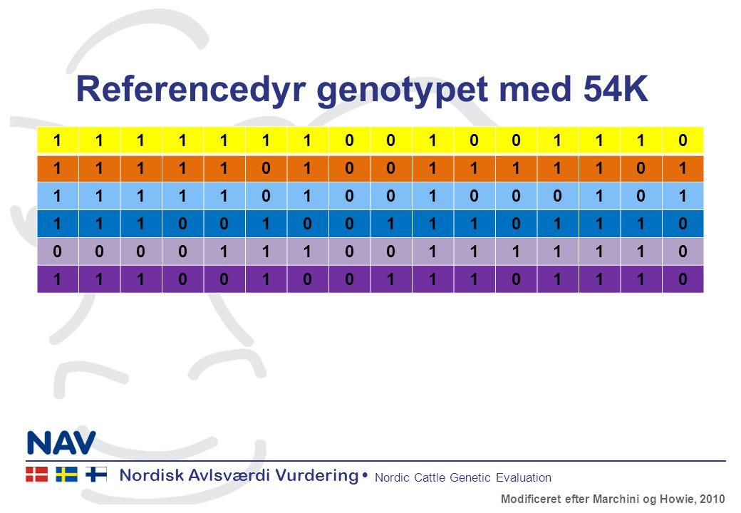 Nordisk Avlsværdi Vurdering Nordic Cattle Genetic Evaluation Referencedyr genotypet med 54K 1111111001001110 1111101001111101 1111101001000101 1110010011101110 0000111001111110 1110010011101110 Modificeret efter Marchini og Howie, 2010