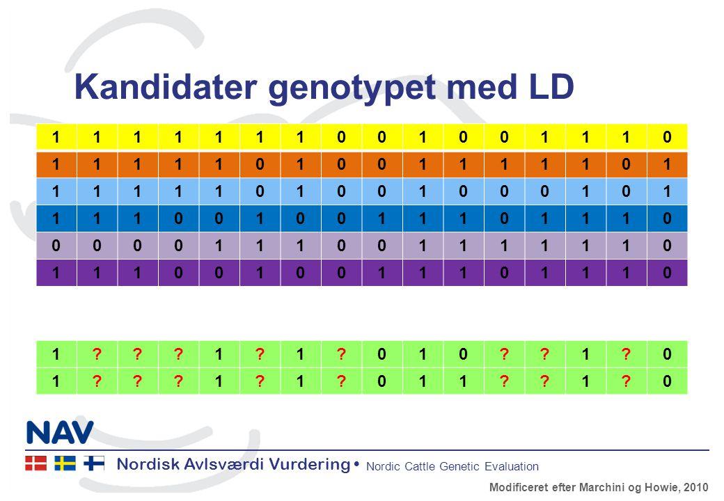 Nordisk Avlsværdi Vurdering Nordic Cattle Genetic Evaluation Kandidater genotypet med LD 1111111001001110 1111101001111101 1111101001000101 1110010011101110 0000111001111110 1110010011101110 1 1 1 010 1 0 1 1 1 011 1 0 Modificeret efter Marchini og Howie, 2010
