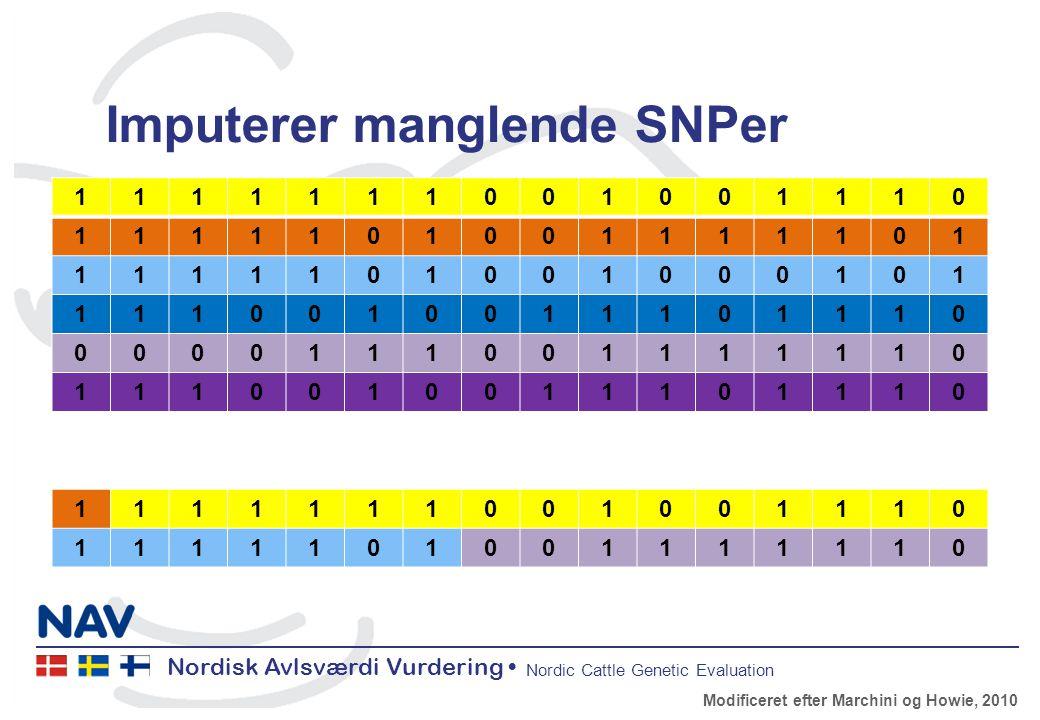 Nordisk Avlsværdi Vurdering Nordic Cattle Genetic Evaluation Imputerer manglende SNPer 1111111001001110 1111101001111101 1111101001000101 1110010011101110 0000111001111110 1110010011101110 1111111001001110 1111101001111110 Modificeret efter Marchini og Howie, 2010